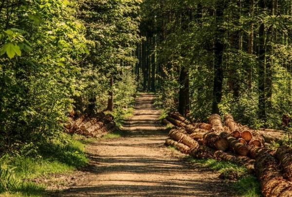 Uprava za šume poklanja sadnice svima koji žele da pošume svoje imanje