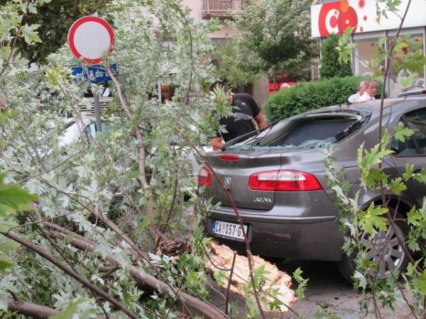 Čitaoci reporteri / Vetar polomio drvo u centru grada