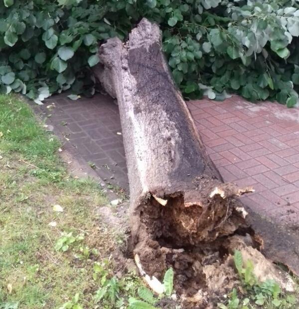 Vetar polomio drvo u centru grada