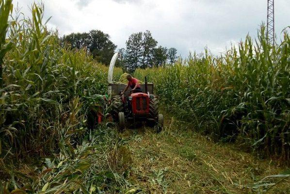 Padavine najviše odgovaraju kukuruzu, niske temperature štete voću