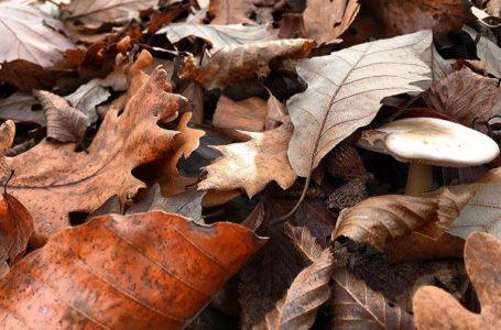 Kakva nas jesen čeka i da li će biti Miholjskog leta