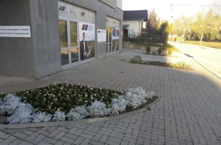 More ljubičica ispred SNS-a i u centru grada