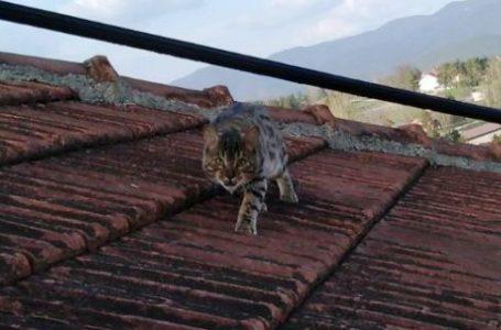Veliki Pablo, novi mačak u kraju