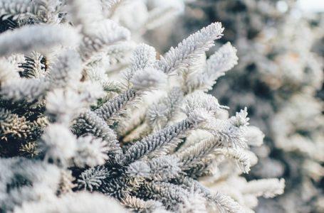 Ujutro hladno, tokom dana pretežno sunčano vreme