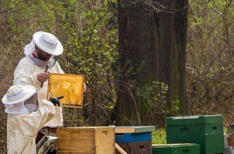 Izgubljena godina za pčelare