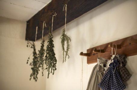 Biljke koje teraju insekte iz vašeg stana